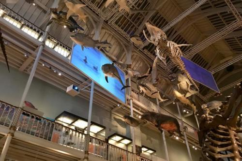 NMS Natural World Gallery - A visit to the National Museum in Edinburgh - HH Lifestyle Travel