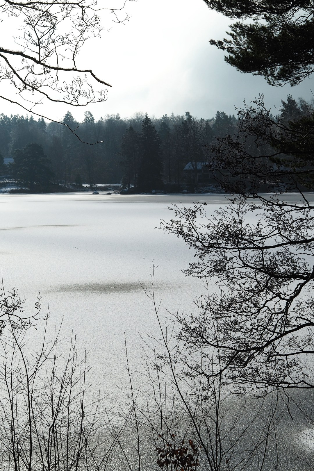 Swedish forests and frozen lakes - a view from the Vipp Shelter