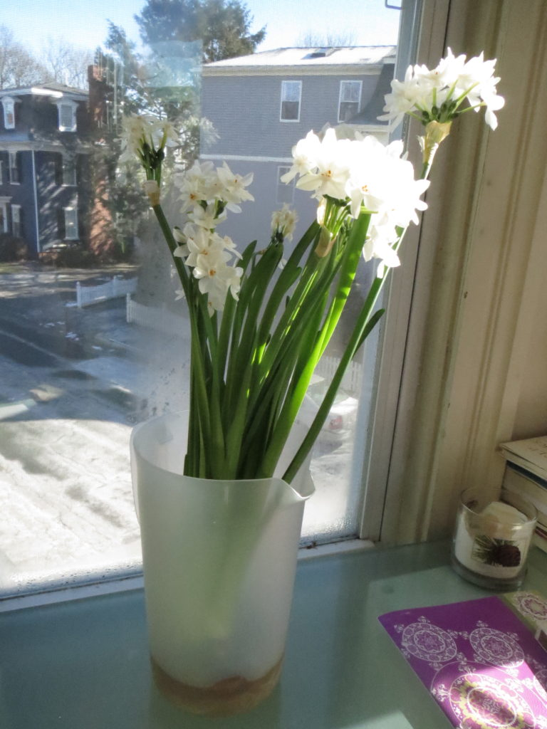 paper whites in plastic
