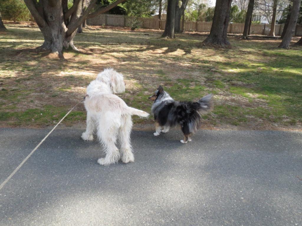 greeting a dog