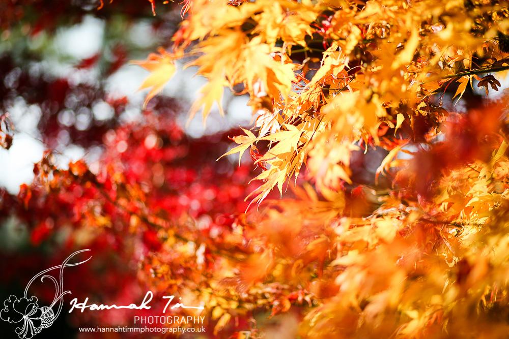 Westonbirt Arboretum Autumn colours