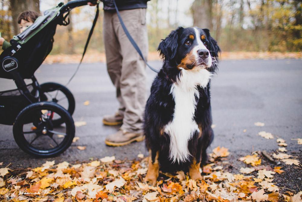 professional pet portraits