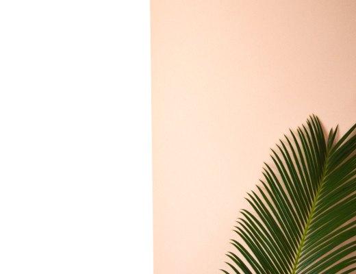 Urban Jungle Bloggers Plant pop | Hannah in the house
