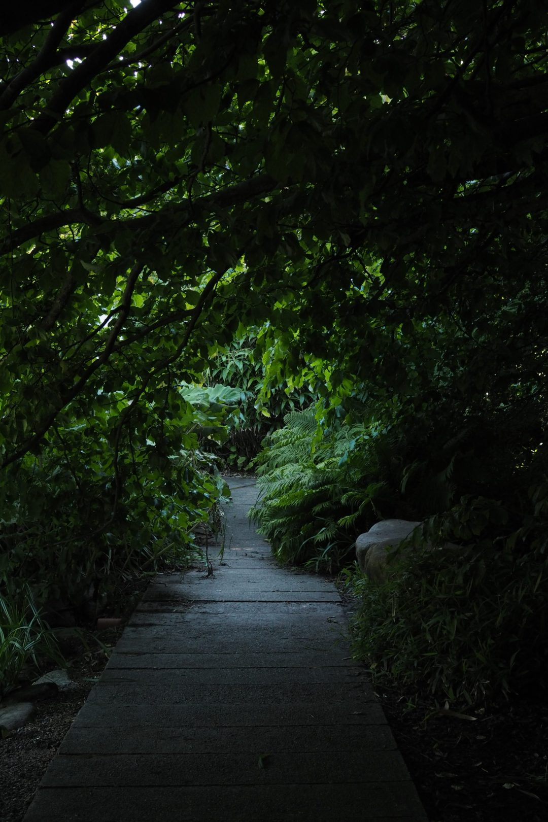 A green path, botanical gardens