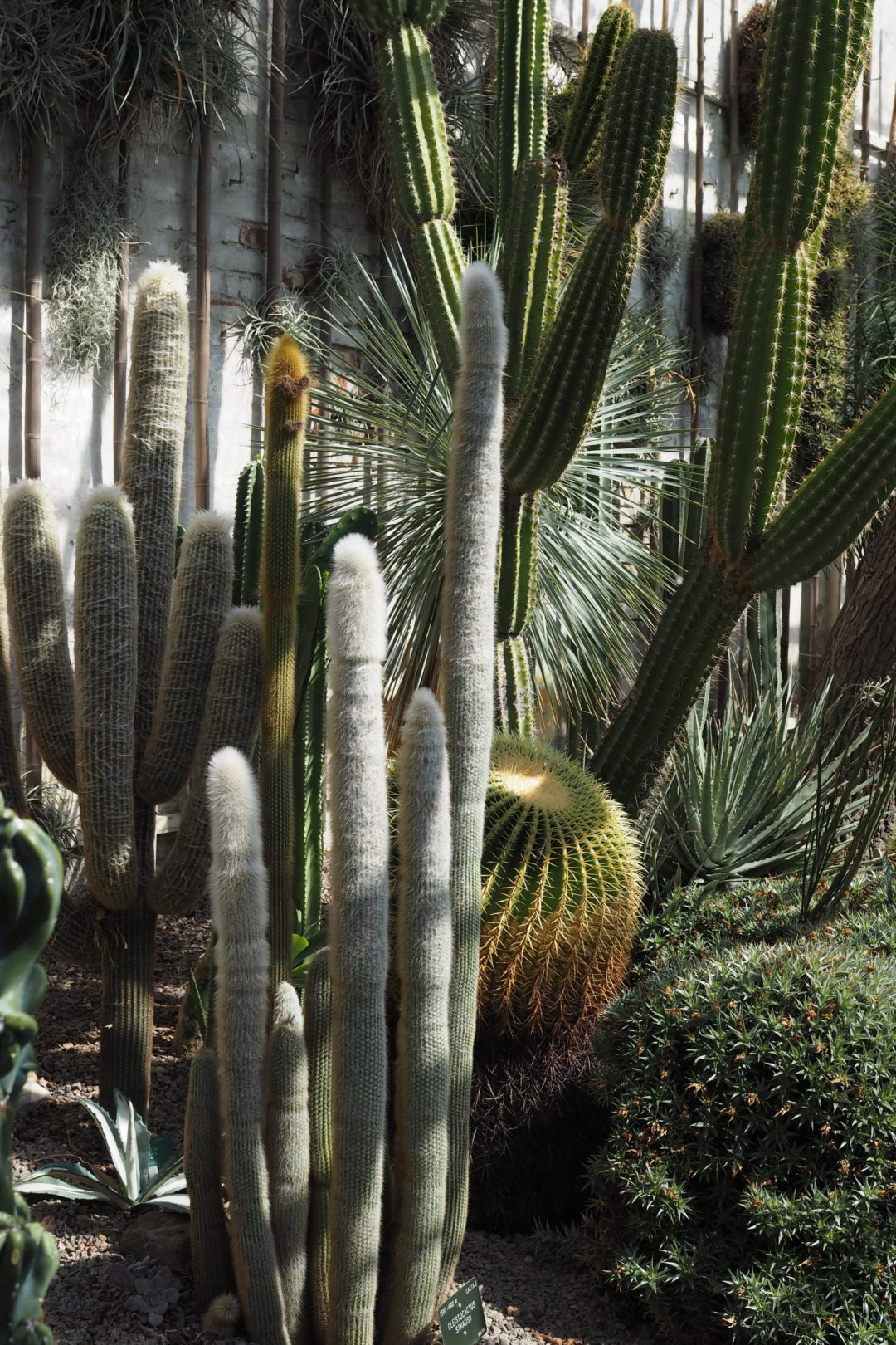 Catus love. Urban jungle, glass house in the Botanical Gardens Copenhagen