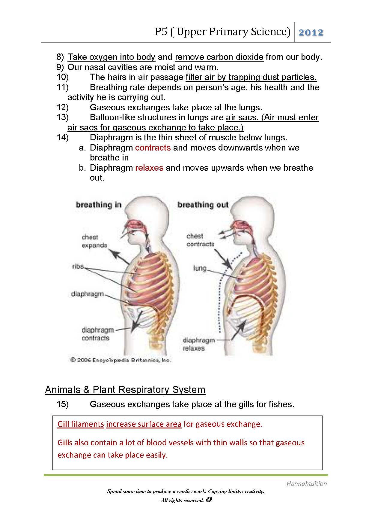 P5 Air And Respiratory System Page 2 Hannahtuition