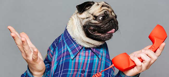 A Dog trying to use the telephone with human hands.