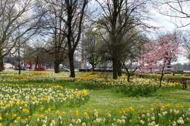 Frühling am Maschsee