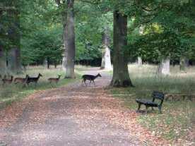 Rehe im Tiergarten