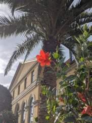 Sommerliche Pflanzenpracht