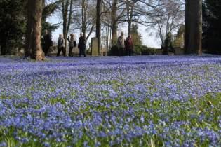 Blauer Blütenteppich