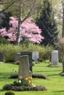 Gräberfeld im Frühjahr