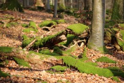 Naturpark-Spessart-Ortsbegehung-Rothenbuch-IMG_9242