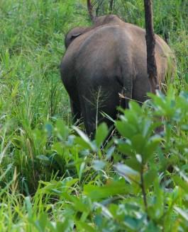 Van olifant naar ontspanning