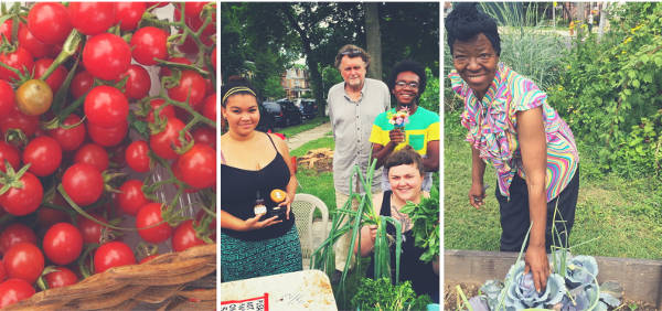 photos: cherry tomatoes on the vine, farm stand, gardener