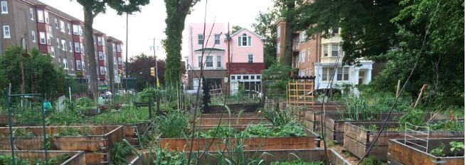 photo: urban garden
