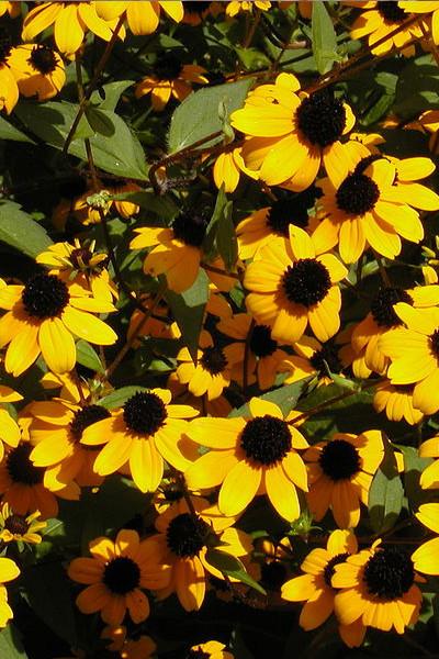 photo: yellow flowers