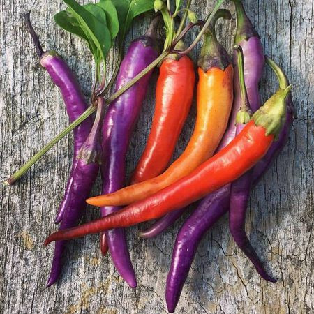 photo: multicolored hot peppers
