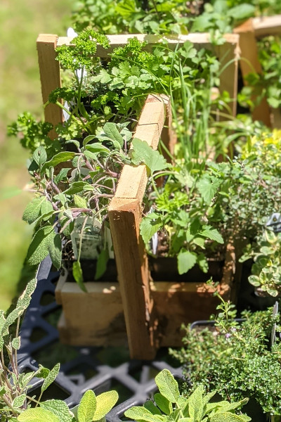 photo: wooden box of herbs