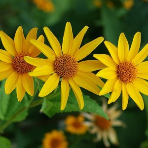 photo: yellow flower blossoms