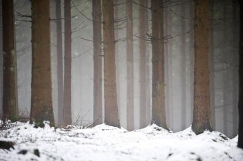 Stavelot in België. Bomen in besneeeuwd bos bij rivier de Ambleve. Nikon D3 • ISO 720 • f/2.8 • 1/160 @ 150mm. © Fotografie George Burggraaff.