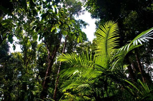 Lianen Anpassungen an das Leben im Regenwald