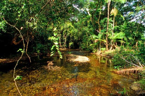 Tropischer Regenwald 214kologie N228hrstoffkreislauf Probleme