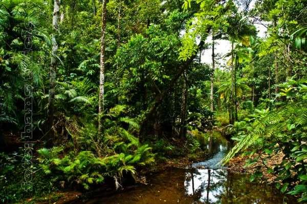 Artenvielfalt und Diversit228t des Regenwaldes