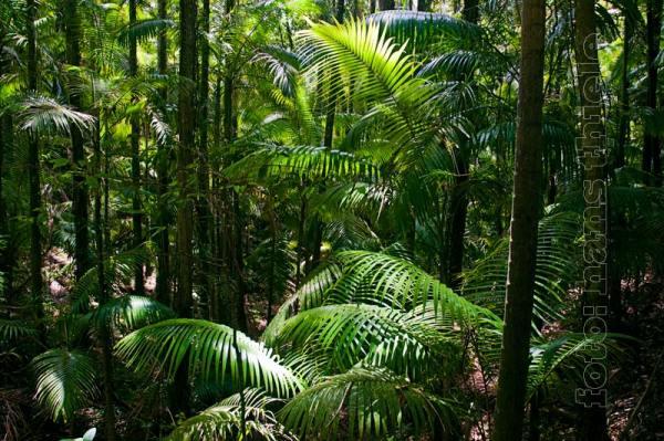 Eungella NP Wanderungen durch den Regenwald