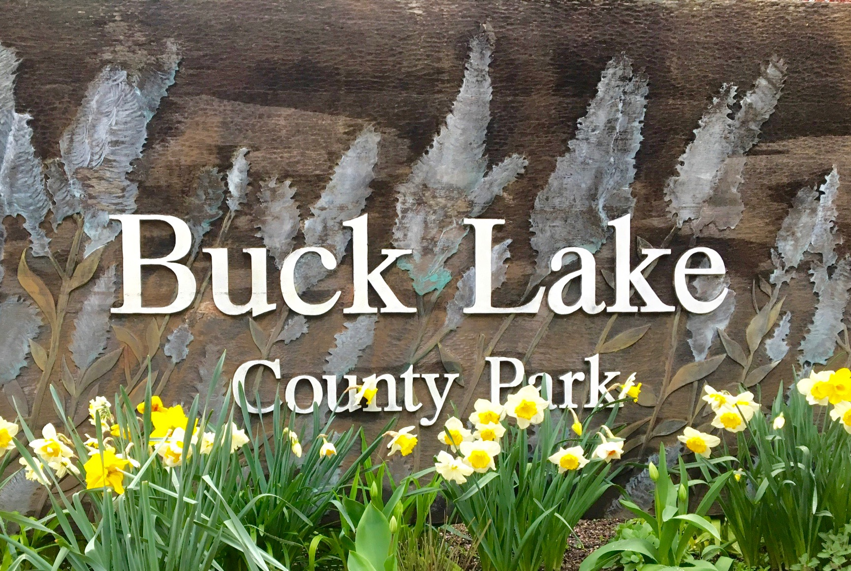 Buck Lk Sign Daffodils