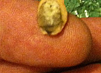 Jesus? Pumpkin Seed