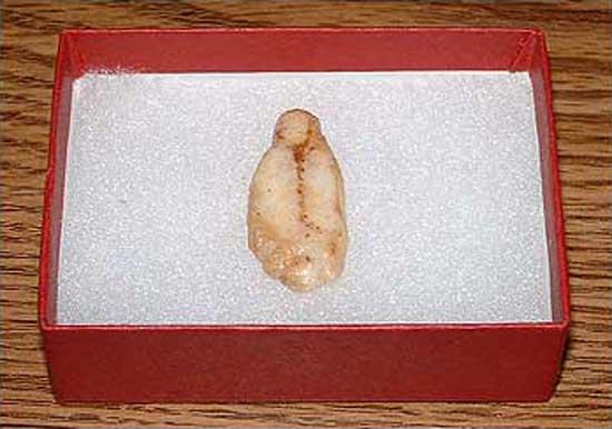 Virgin Mary Banana Chip