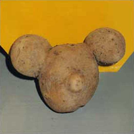 Potato Mickey