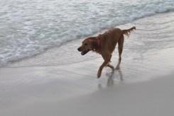 Navarre Beach Trip | read more at happilythehicks.com