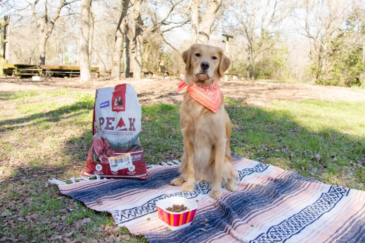 Read about my favorite ways to spend quality time with my pet, and check out the Taco Stuffed Cornbread Muffins recipe! | read more at happilythehicks.com