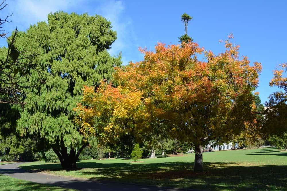 Tree in Royal Botanic Gardens, Sydney