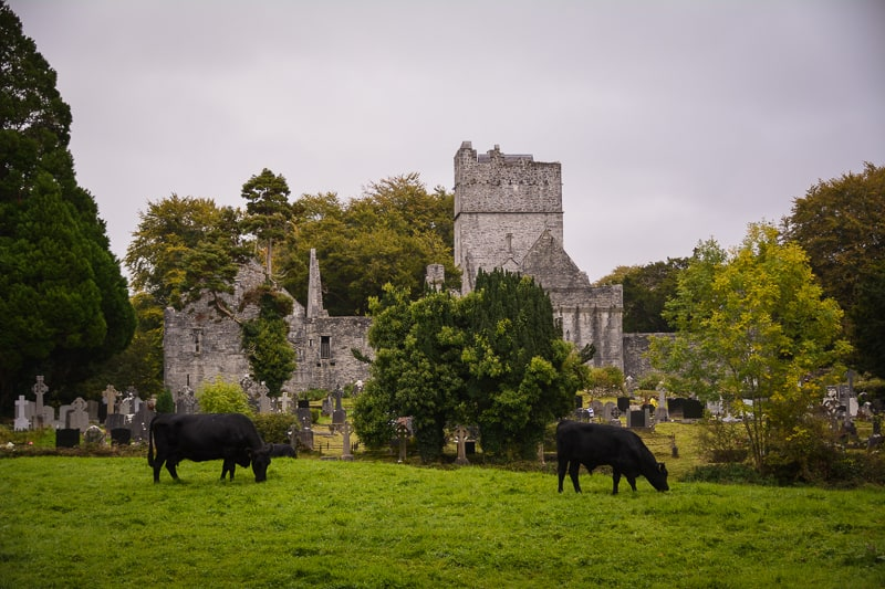 The ruin of Muckross Abbey