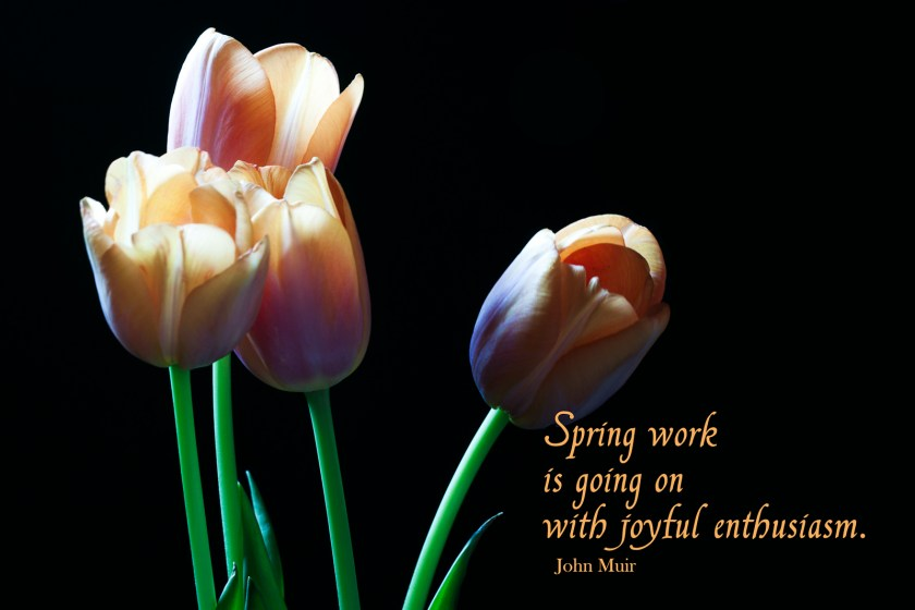Tulips with quote