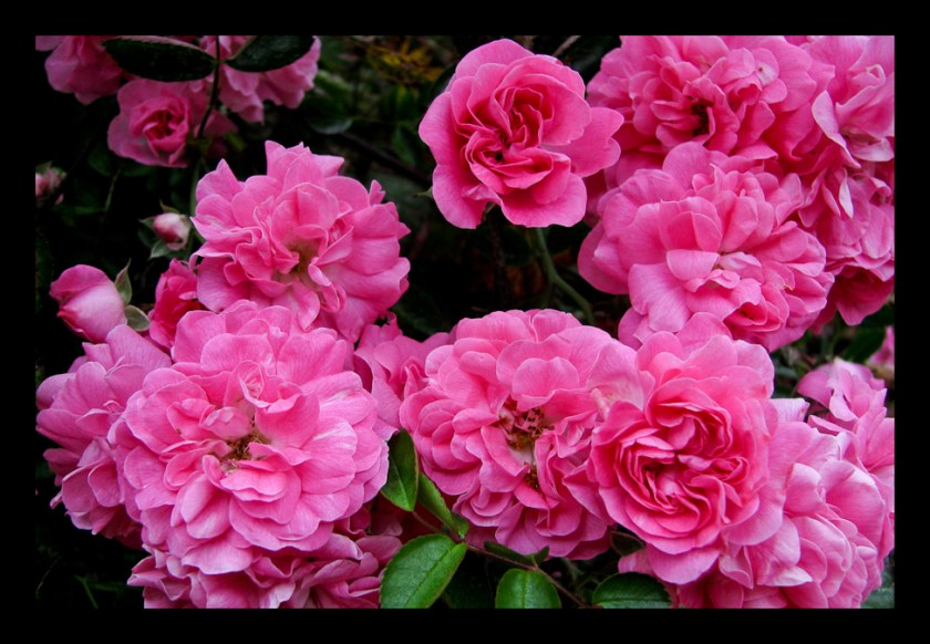 We can complain because rose bushes have thorns or rejoice because thorn  bushes have roses. Abraham Lincoln