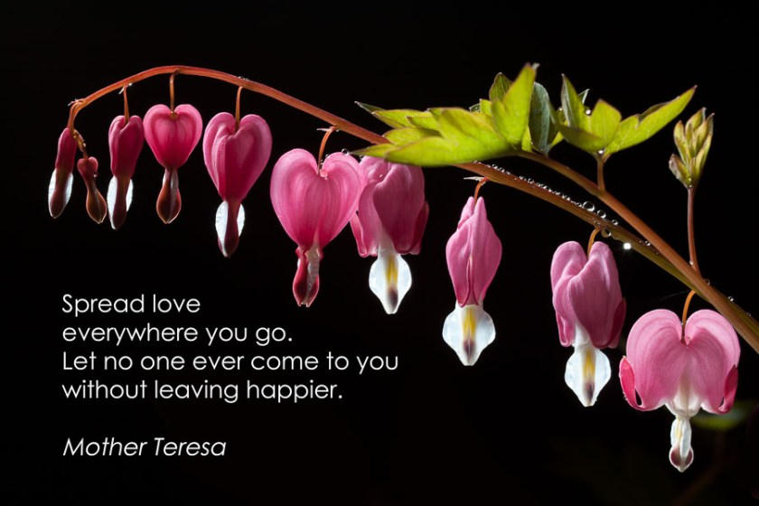 Dicentra with quote (1 of 1)