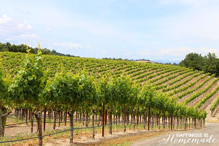 Rows of Grapes at the Sonoma-Cutrer Vineyard