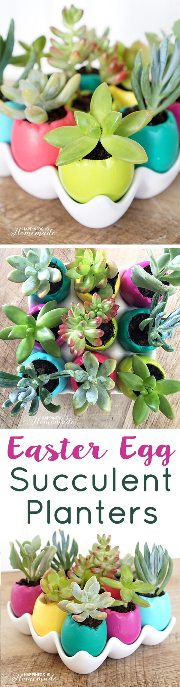 Colorful Ceramic Easter Egg Shell Succulent Planters for Spring