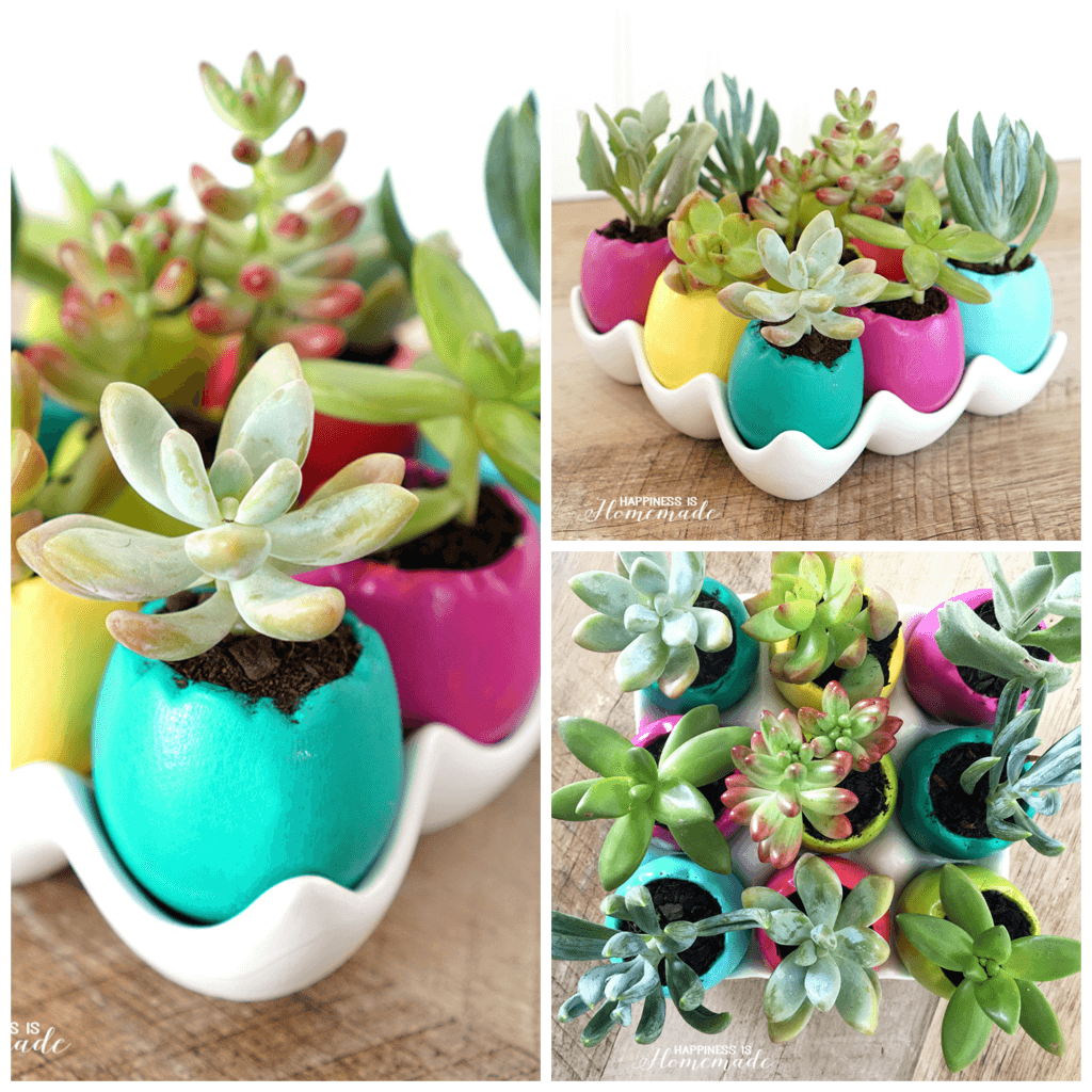 Easter Egg Succulent Planters - Perfect for Spring Time