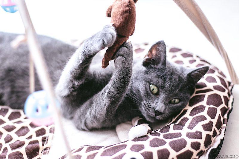 les meilleurs jouets pour chats selon