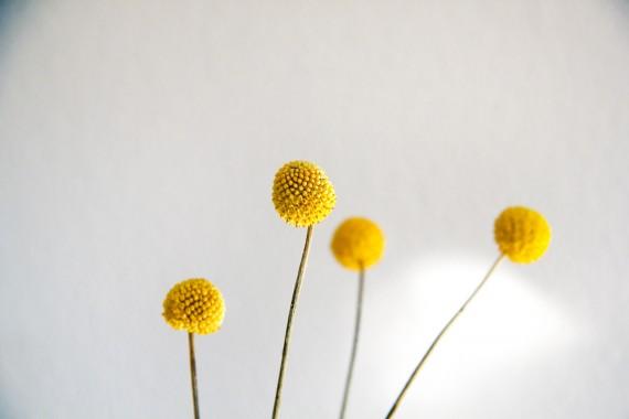 happy acorn gele bloempjes