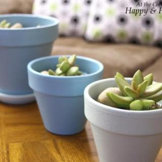 Succulent Love and Painted Pots