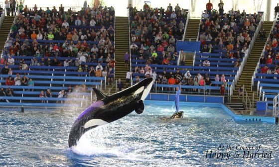 Shamu At Sea World 3