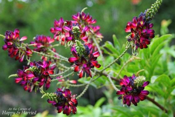 Pretty Flowers at Japanese Tea Garden