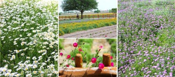 Wildseed Farms Flower Fields