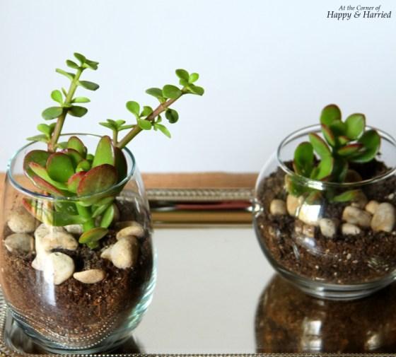 Easy Spring DIY - Glass Jar Terrariums